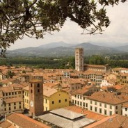 Olive Oil Convention in Lucca, Italy